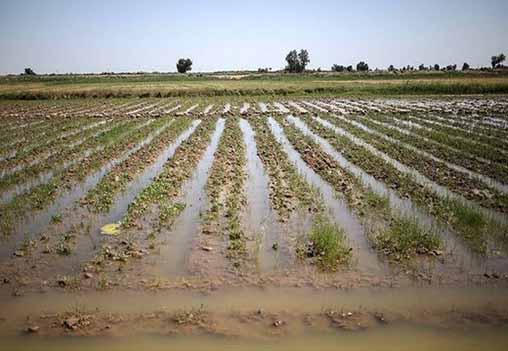 ۱۵ راهکار برای افزایش تاب آوری بخش کشاورزی در مقابل سیل