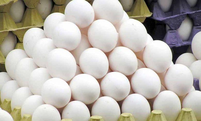 دلایل گرانی تخممرغ