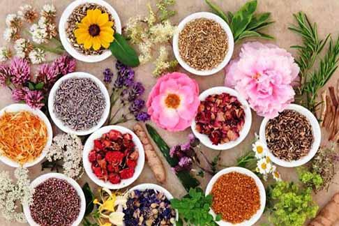 يافته ها و دانستنی ها در زمینه مصرف گیاهان دارویی در دامپزشکی
