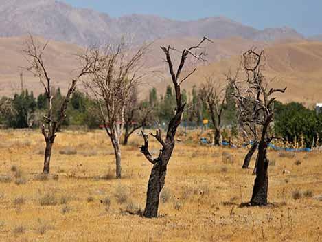چند راهکار برای کاهش خسارات خشکسالی در باغات