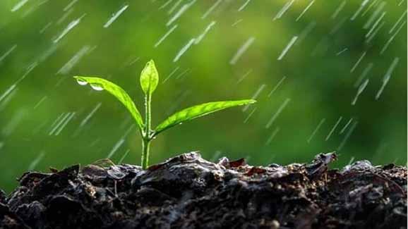 آیا آب سبز راهگشای کمبود آب در بخش کشاورزی است؟