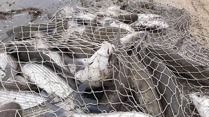 صادرات و هزینه تولید؛ نواختن زنگ کوچ ماهیان از سفره گیلانیها