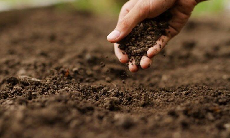 محصولات کشاورزی 9 تولیدکننده بانوی روستایی استان سمنان
