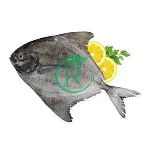 ماهی بازار اولین بازار خرید و فروش ماهی و میگو بوشهر