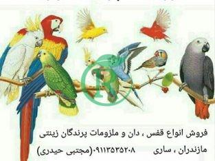 فروشگاه کهربا مجهزترین مرکز تخصصی پرندگان زینتی
