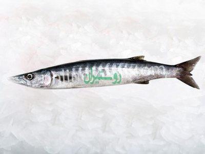 آنلاین ماهی – فروشگاه اینترنتی ماهی و میگو تازه