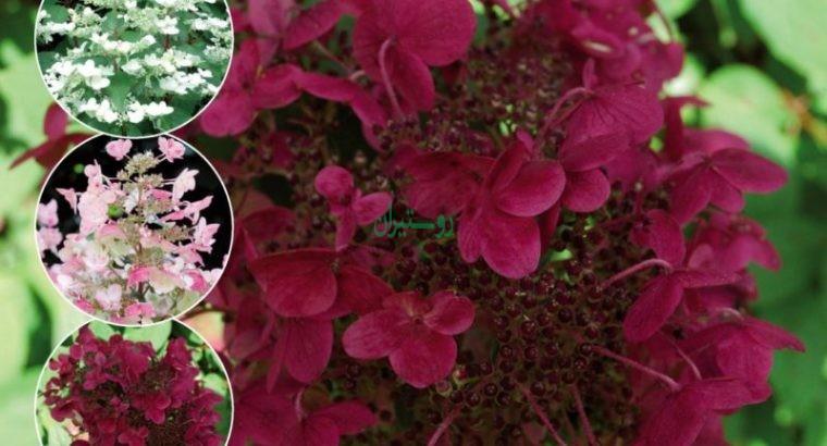 فروشگاه اینترنتی گیاهان خاص بست پلنت