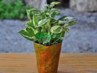گیاهان آپارتمانی حیاط
