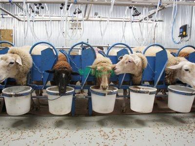 کارخانه خوراک دام و طیور دامداران دالانکوه