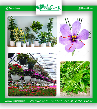 گیاهان دارویی و زینتی