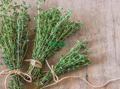گیاهان داروئی عطارین