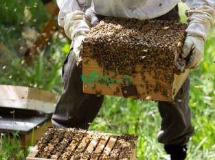 تجهیزات زنبورداری عسل هیر