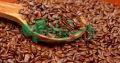 شرکت توسعه کشت دانه های روغنی