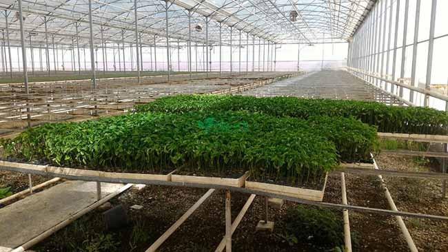 صادرات محصولات و فرآورده های کشاورزی و غذایی