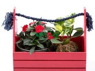 گیاه و گل آپارتمانی بنیس فلاور