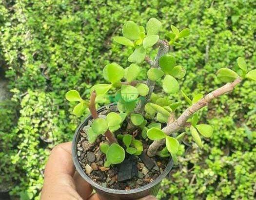 گل و گیاه کمیاب کاکتوس استور